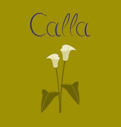 Flat on background flower calla vector