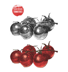 hand drawn cherry tomatoes vector image vector image