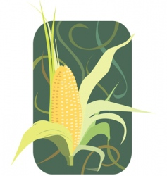maize vector image