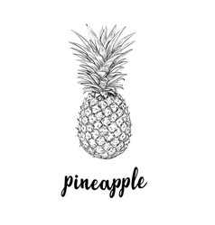pineapple sketch is a vintage drawing vector image vector image