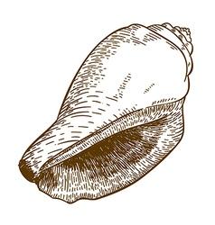 Engraving cone shell vector
