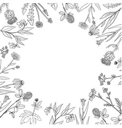 Round frame with medical plants vector