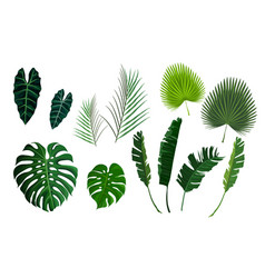 tropical palm leaves jungle leaves set vector image