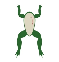 Biology class frog surgery icon vector