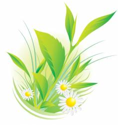 plants and chamomile vector image vector image
