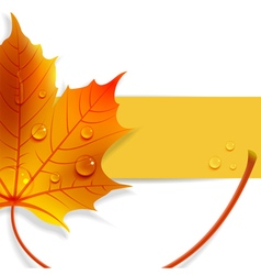 Banner with a maple leaf vector