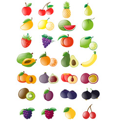 different kinds of fresh fruits vector image