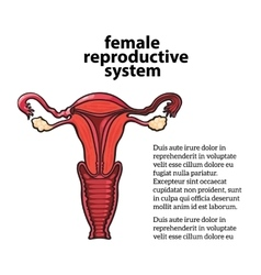 female reproductive system vector image