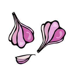 Garlic and garlic clove herbs and spices sketch vector
