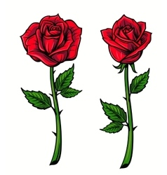 Red rose cartoon vector image