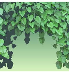 background of dense green foliage vector image vector image