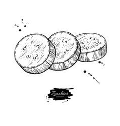 Zucchini slice hand drawn vector