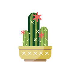 Flowering cactus house plant indoor flower in pot vector