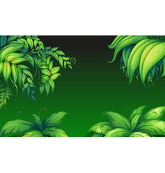 Green leafy plants vector image
