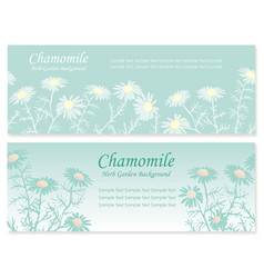 Herbs background coriander and chamomile 1 vector