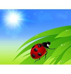 Green grass sun and ladybird vector