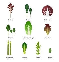 Set of salad bowl leafy vegetables green salad vector