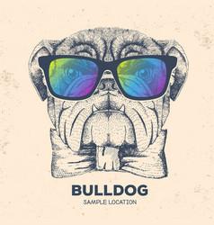 Hipster animal bulldog hand drawing muzzle vector