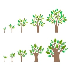 Stage Growth of a Tree Set vector image