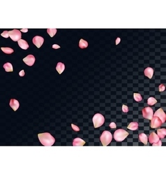 Abstract background with flying pink rose petals vector
