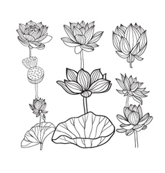 hand drawn lotus flowers and leaves vector image