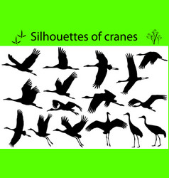 silhouettes of cranes vector image vector image