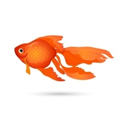 Goldfish isolated on white small red aquarium vector