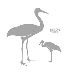 Heron isolated bird on white background vector