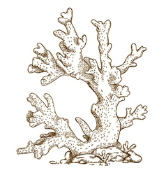 Engraving coral vector