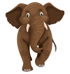 baby elephant with brown skin vector image