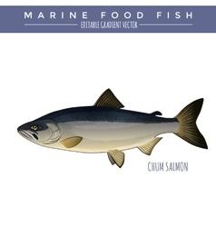 Chum salmon marine food fish vector