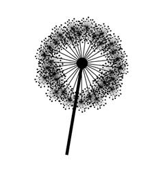contour dandelion with stem and pistil closeup vector image