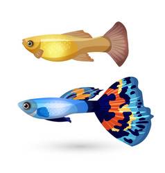 Fish Poecilia reticulata and carp isolated on vector image vector image