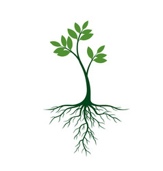 Young tree with roots and green leafs vector