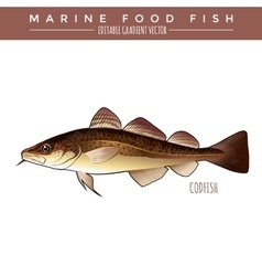 Codfish marine food fish vector