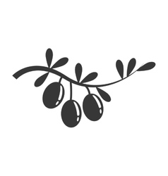 Olive plant icon organic and healthy food design vector