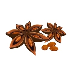 Anise star isolated on white stars shaped fruit vector