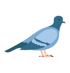 Flat bird isolated on white background beautiful vector