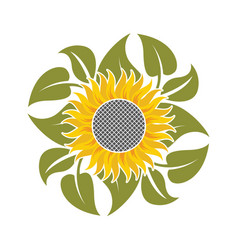 flower of sunflower vector image