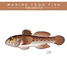 Goby marine food fish vector