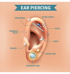 Ear piercing types positions background poster vector