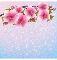 Background with sakura blossom cherry tree vector image