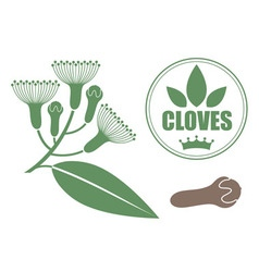 Cloves vector