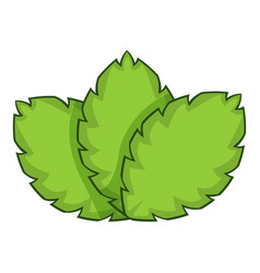 Sage herb icon cartoon style vector