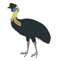 Southern cassowary bird detalised on white vector