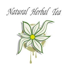 natural herbal tea vector image