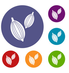 Cardamom pods icons set vector