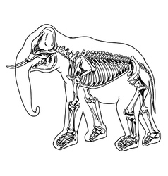 Elephant skeleton vector