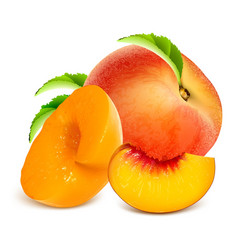 Ripe peaches whole and slices vector