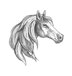 Sketch of a horse head vector